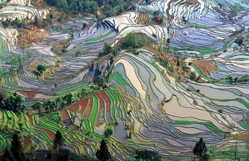 champs_terrace_yunnan_chine