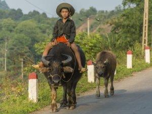 Balade en moto et histoire de fesses entre Bao Lac et Cao Bang