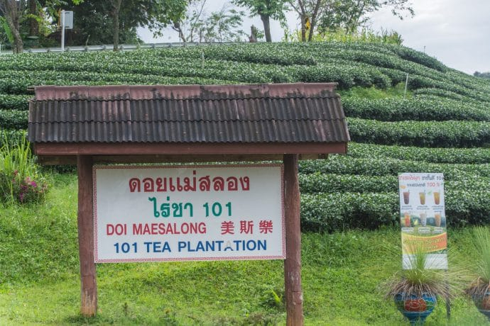 101 tea plantation mae salong - thailande