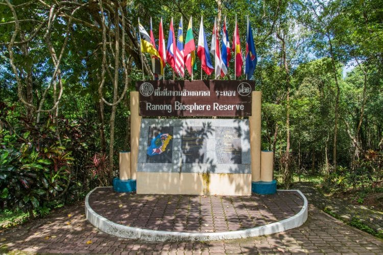 ngao mangrove forest - ranong biosphere reserve - thailande