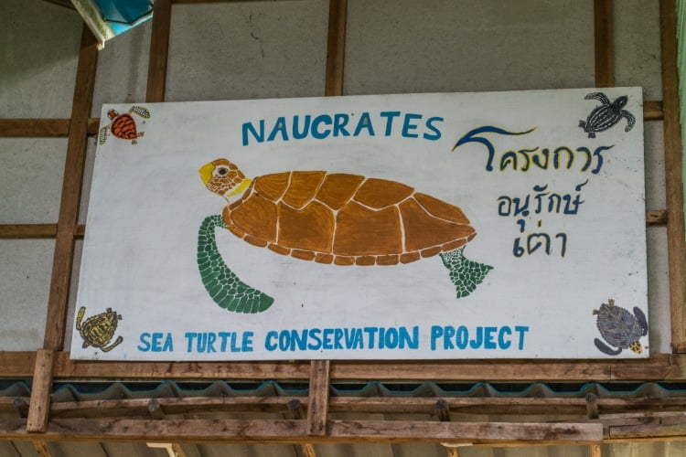 naucrates turtle conservation project koh phra thong