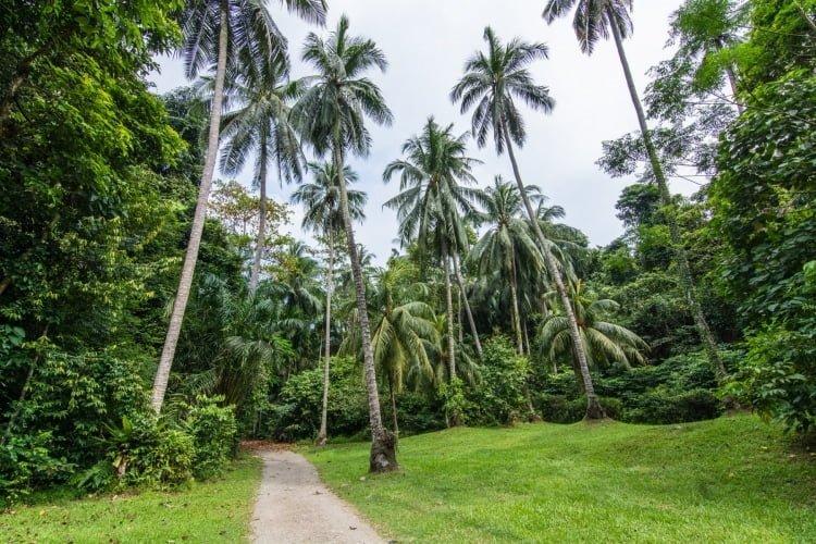 cocotiers sensory trail pulau ubin singapour