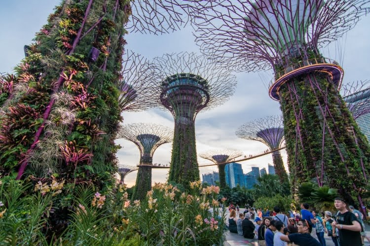 super arbres gardens by the bay singapour